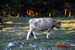 Animales en la I subida Serra da Groba